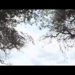 VIDEO: Dj Maphorisa – Bentley Ft. Casper Nyovest, Howard